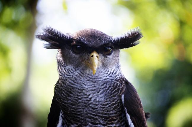 owl-1019062_1920