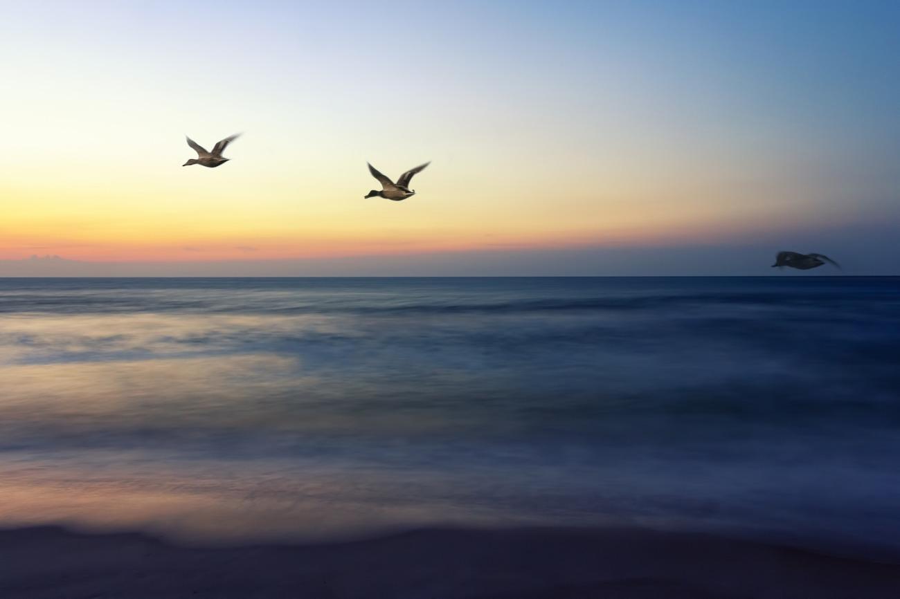 sunrise-flight-1364048_1920.jpg